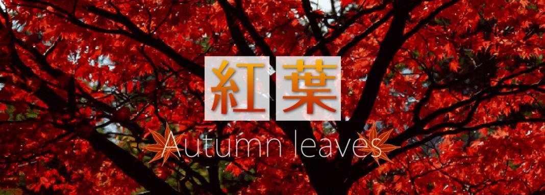 แนะนำเว็บไซต์ เช็กใบไม้เปลี่ยนสีในญี่ปุ่น