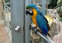 เที่ยวสวนนก สัมผัสกับนกอย่างใกล้ชิด ที่ Gyeongju Bird Park เมืองคย็องจู ที่เกาหลี