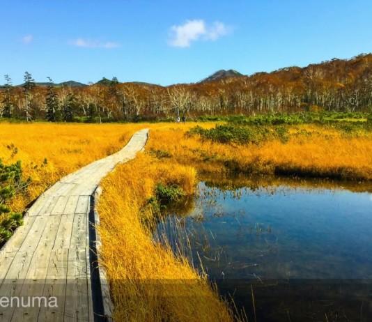 Niseko Panorama Road ถนนสายวิวสวยแห่งนิเซโกะ