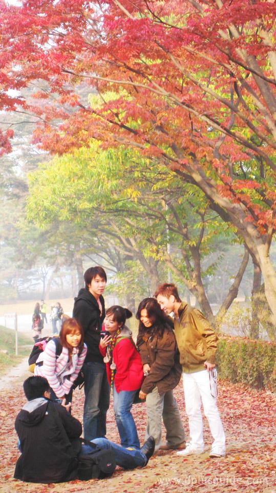 บรรยากาศใบไม้ร่วงที่เกาหลี