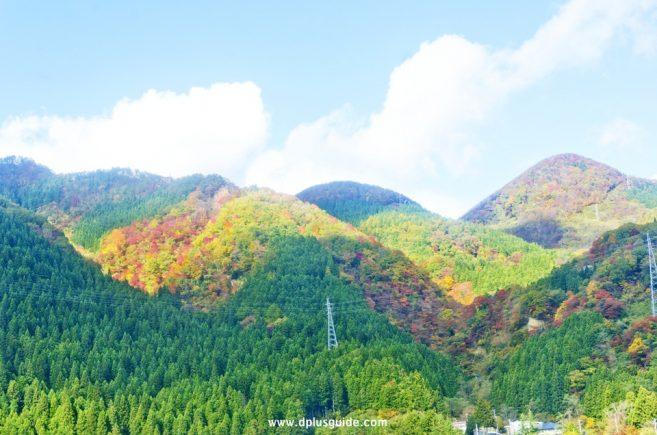 ใบไม้เริ่มเปลี่ยนสีแล้ว