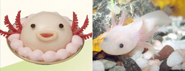 Axolotl sweets from Niche animals x Patisserie Swallowtail
