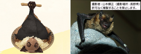 Japanese short-tailed bat sweets from Niche animals x Patisserie Swallowtail