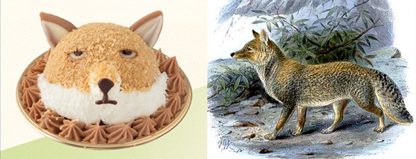 Tibetan Sand Fox sweets from Niche animals x Patisserie Swallowtail