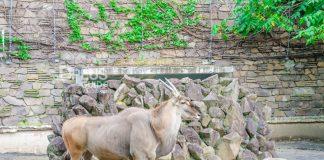 Maruyama-Zoo