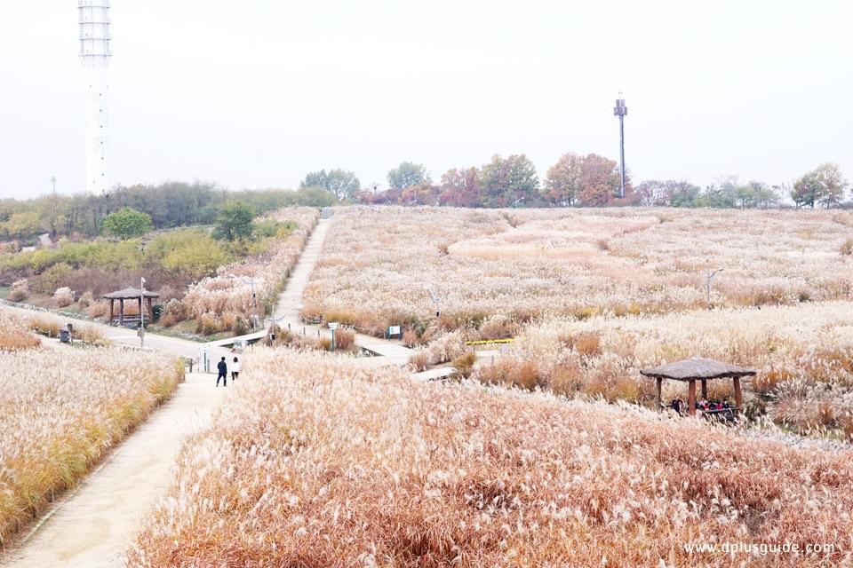 เที่ยวโซลฤดูใบไม้ร่วง ชมทุ่งและใบไม้เปลี่ยนสีที่สวนฮานึล (Haneul Park)  เวิลด์คัพพาร์ก | DPlus Guide