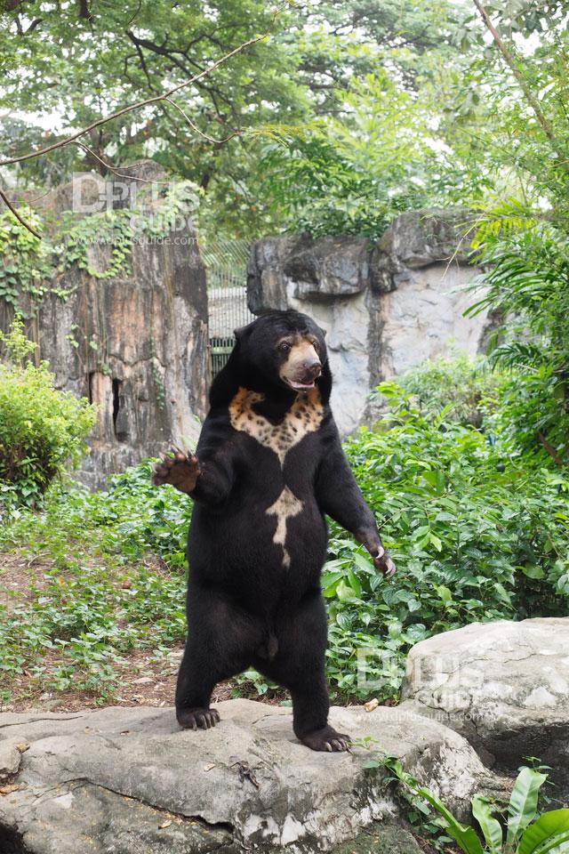 ส่วนจัดแสดงหมี สวนสัตว์ดุสิต (Dusit Zoo)