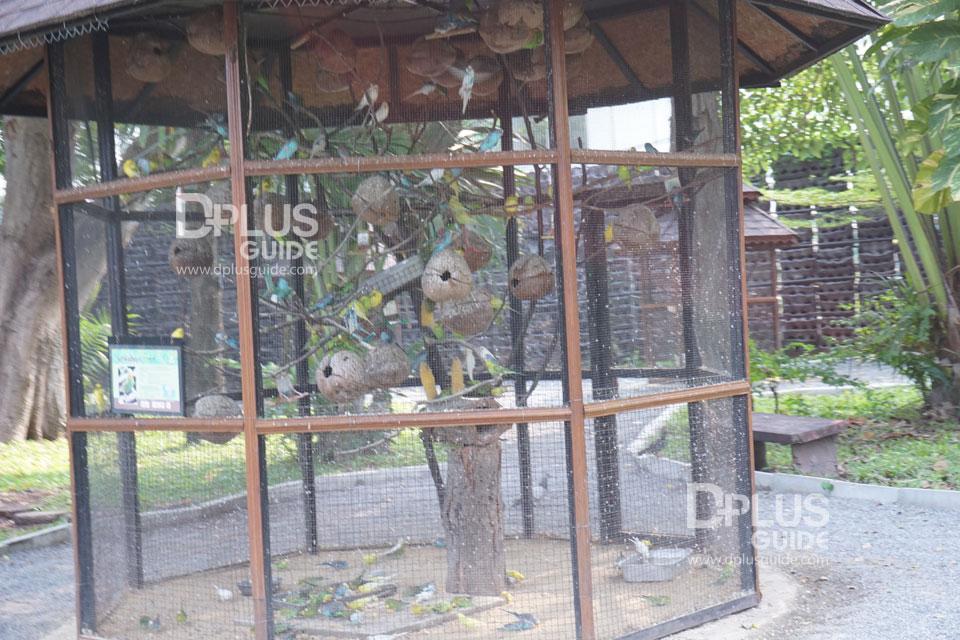 นกหงส์หยก สวนสัตว์ดุสิต (Dusit Zoo)