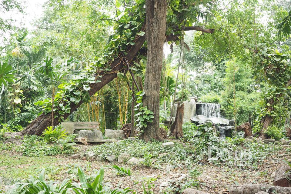 บริเวณต้นสัก สวนสัตว์ดุสิต (Dusit Zoo)