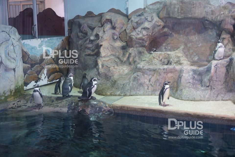 ส่วนจัดแสดงนกเพนกวิน สวนสัตว์ดุสิต (Dusit Zoo)