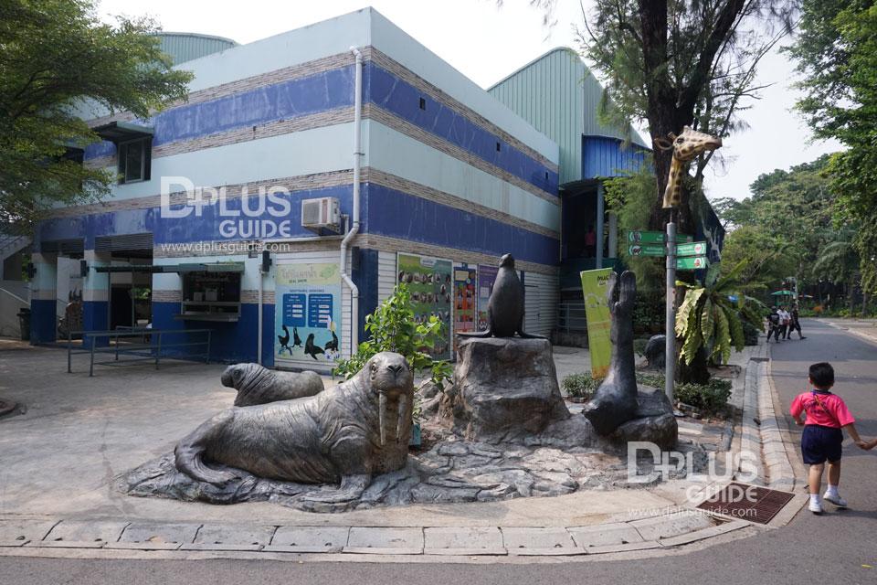 การแสดงแมวน้ำ สวนสัตว์ดุสิต (Dusit Zoo)