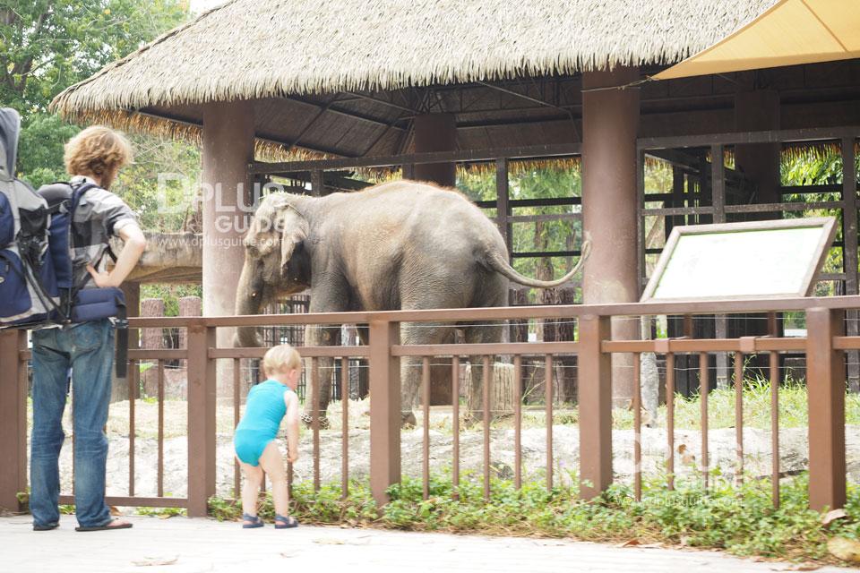 ส่วนจัดแสดงช้าง สวนสัตว์ดุสิต (Dusit Zoo)