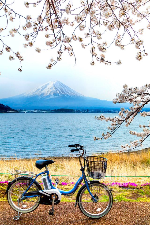 ทะเลสาบคาวากูชิโก (Kawaguchiko)