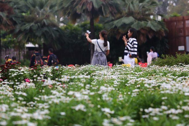 เที่ยวไทยปีใหม่นี้ เคาน์ดาวน์ที่อุทยานหลวงราชพฤกษ์