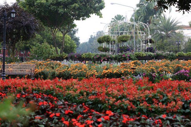 เทศกาลชมสวน Flora Festival 2017อุทยานหลวงราชพฤกษ์