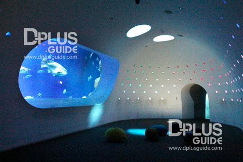 บรรยากาศตู้ดีไซน์แปลกๆ เก๋ไก๋ ใน Aquarium Umitamago