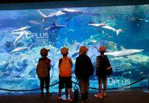 เที่ยวญี่ปุ่น Aquarium Umitamago เมืองเบปปุ ภูมิภาคคิวชู