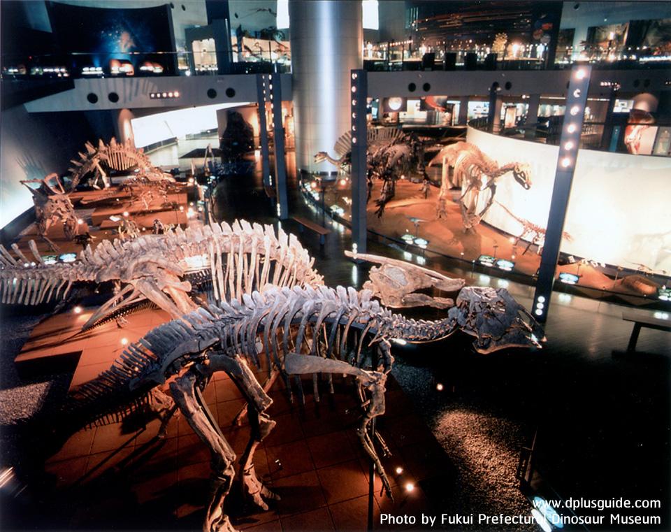 โครงกระดูกไดโนเสาร์ต่างๆ หลากหลายพันธุ์