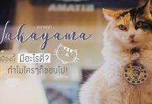 วากายาม่า (Wakayama) เมืองนี้มีดีอะไร? ทำไมใครๆ ก็ชอบไป!