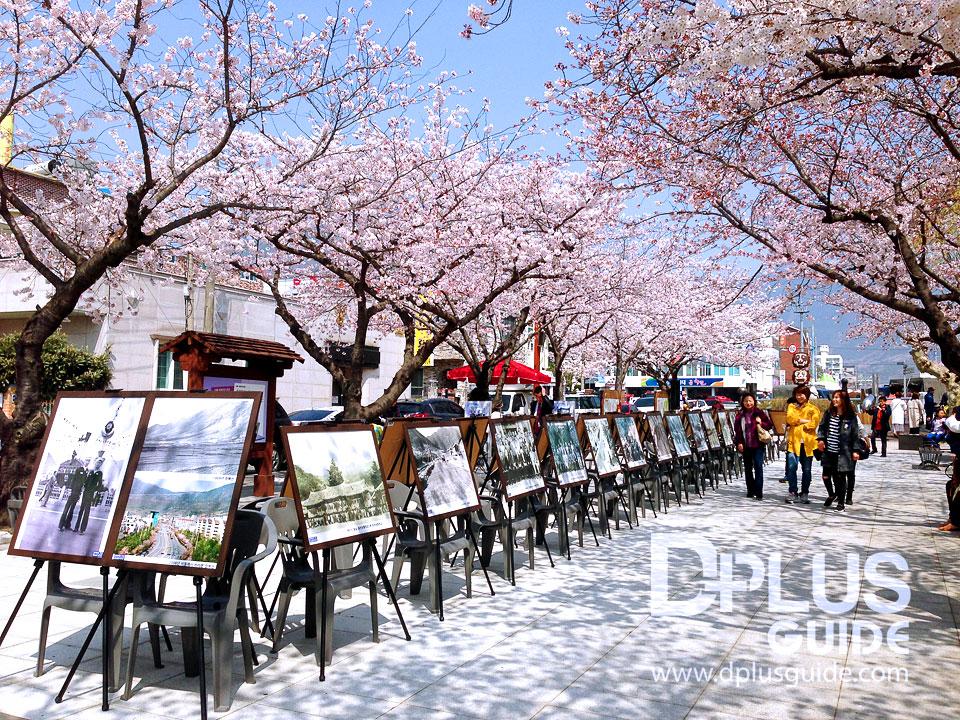 นิทรรศการภาพถ่ายในอดีตของเมืองจินแฮ จัด ณ บริเวณลานหน้าโบสต์คริสตจักรจินแฮ