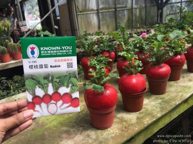 """ร้านขายพรรณไม้ในงานเทศกาลดอกคาล่าลิลลี่ """"Zhuzihu Calla Lily Festival"""" ที่ไทเป"""