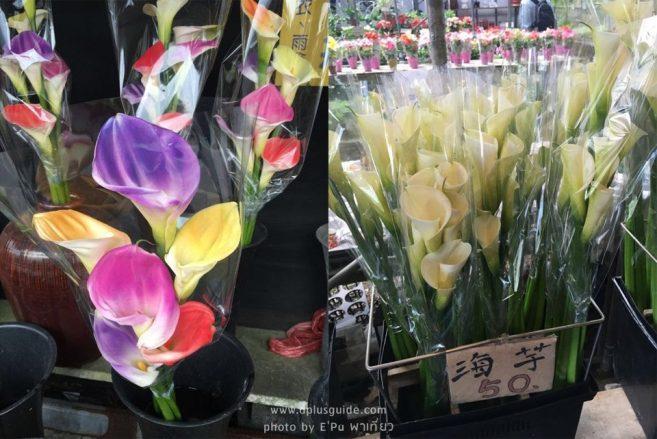 ที่งานเทศกาลคาล่าลิลลี่ ก็มีขายดอกไม้ด้วยนะ