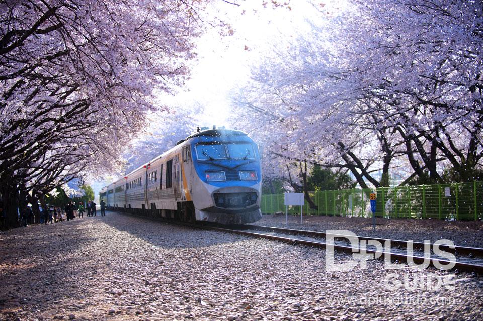 Train to Jinhae ช็อตนี้ที่รอคอย