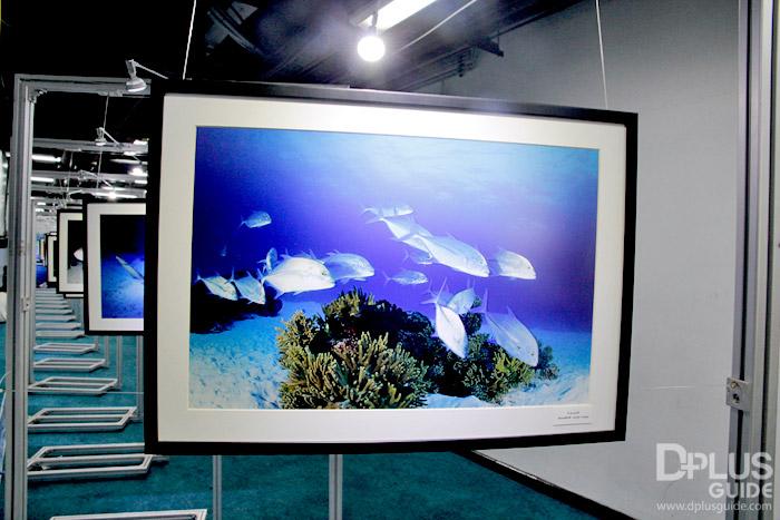 นิทรรศการภาพในวาระ ปีแห่งปะการังสากล (IYOR 2018) มรดกท้องทะเลไทย (Thai Sea Heritage) งานสัปดาห์หนังสือฯ 2561