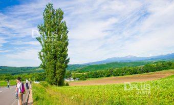 Patchwork-Road