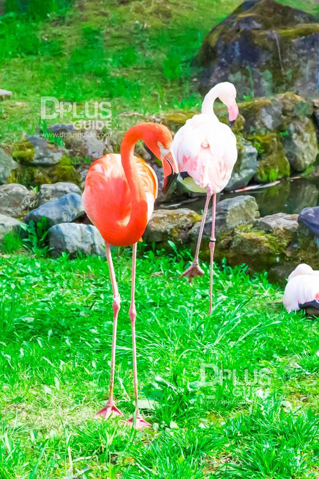 สวนสัตว์ Asahiyama