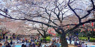 เที่ยวญี่ปุ่น เยือนแหล่งพักผ่อนขนาดใหญ่ สวน Ueno